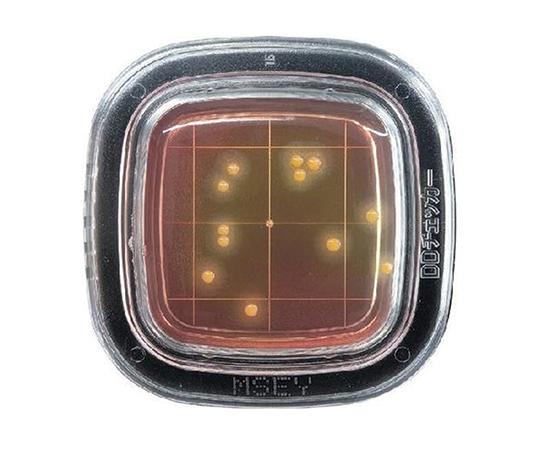 ぺたんチェック®DD MSEY寒天培地 PD0009(20枚)