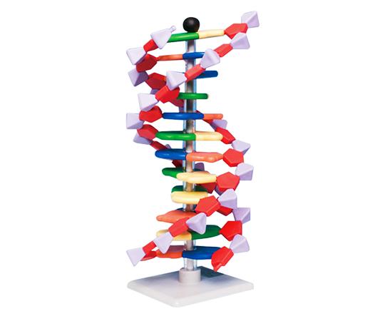 DNAモデルシステム 12レイヤーセット miniDNA(R)